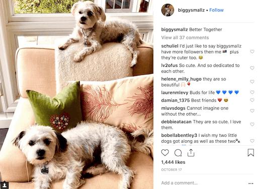 bethenny's dogs