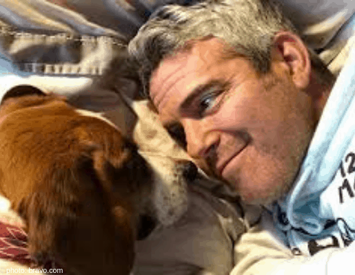 andy cohen wacha dog bravo
